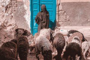 Vrata ovcama