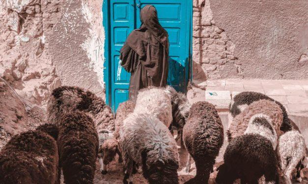 4. uskrsna nedjelja – A – Nedjelja Dobrog Pastira